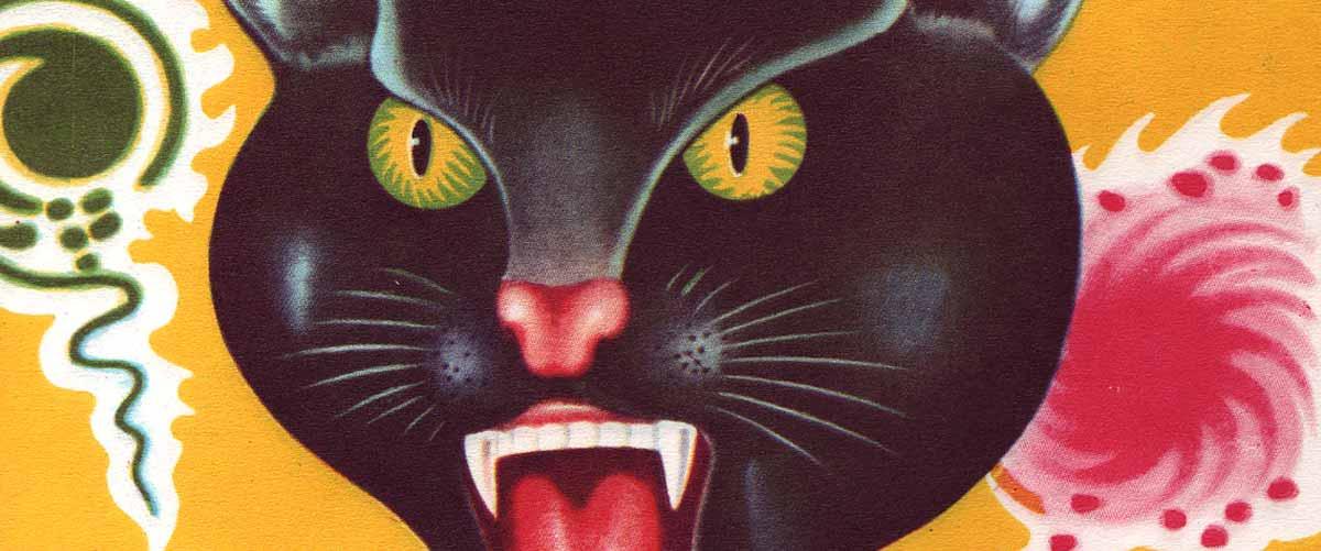 Why Black Cat